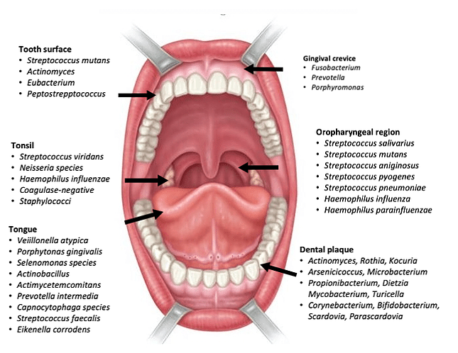 The microbiota of the oral cavity, with more than 700 bacterial species, is one of the most densely populated anatomical sites within the human body. One that requires our attention.